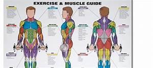 Spri Exercise  U0026 Muscle Chart