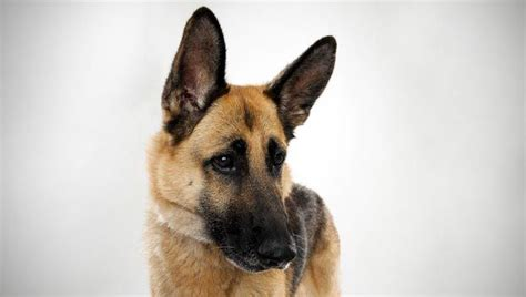 cute animals images  pinterest doggies