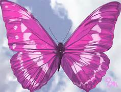 the pink butterfly i p...