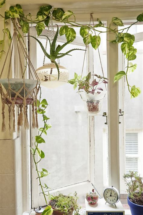 Indoor Climber Plants Are The Right Choice If You Want To