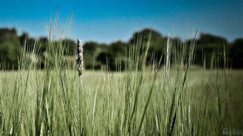 The Matrixer Wallpaper Download, Natur, Hintergrund Bilder ...
