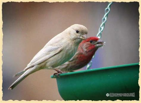 49 best images about leucistic on pinterest robins red