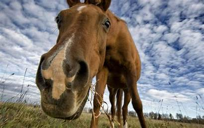 Horse Animal Horses Background Wallpapers Funny Animals