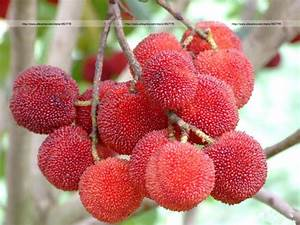 Online Buy Wholesale strawberry fruit tree from China ...