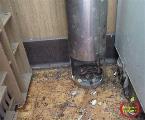 piege a rat fait maison 28 images pi 232 ge a rat cage pieger un rat ziloo fr fabriquer un