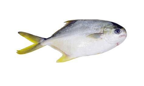 skin  pompano fillets stavis seafoods