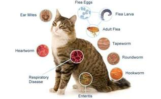 cat diagnosis causes and symptoms of five major cat diseases
