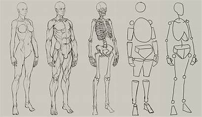 Anatomy Human Drawing Reference Artist Sketch Layout