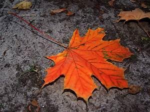 Schöne Herbstbilder Kostenlos : herbst kostenlose herbstbilder hintergrundbilder ~ A.2002-acura-tl-radio.info Haus und Dekorationen