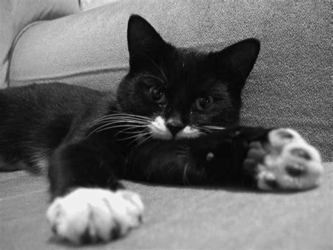 Cats ♚ Whyyyshyyy