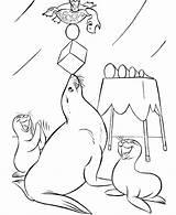 Circus Coloring Pages Animals Seal Printable Animal Clown Carnival Sheets Seals Sheet Fun Honkingdonkey Raisingourkids Adult Worksheets Printing Circuses Printables sketch template