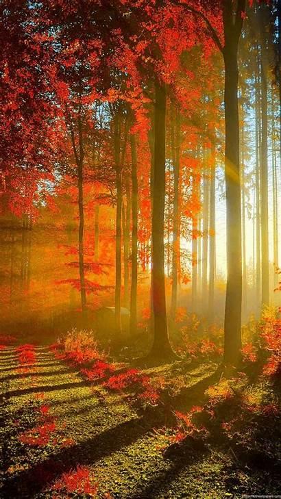Vertical Wallpapers Nature 1080p Forest Wallpapersafari