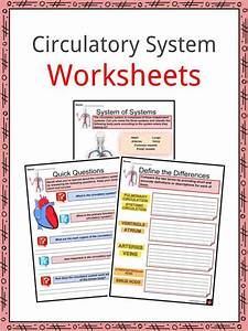 Circulatory System Facts  Worksheets  Cycle  U0026 Heartbeat