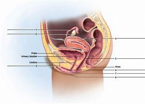 35 Label The Parts Of The Female Reproductive System