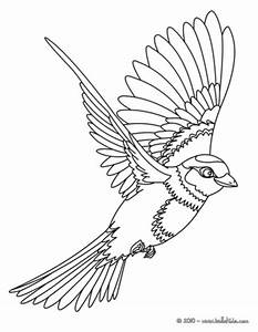 Bird Coloring Pages for Kids >> Disney Coloring Pages