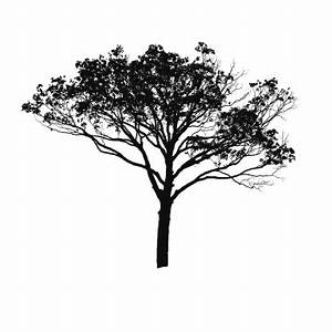 Black Tree PNG Images | Vector and PSD Files | Free ...