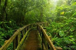 Nicaragua Cloud Forest Ecosystems | Jicaro Island Ecolodge
