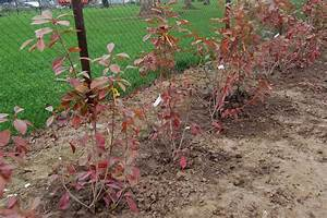 Vente Plantes Grimpantes Plantes De Jardin Jardinerie Truffaut