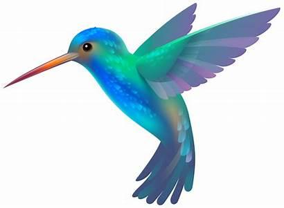 Hummingbird Clipart Clip Transparent Clipartix