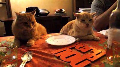 2 chats qui mangent 224 table assis sur une chaise