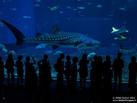 okinawa visite de l aquarium de churaumi et ses requins baleines