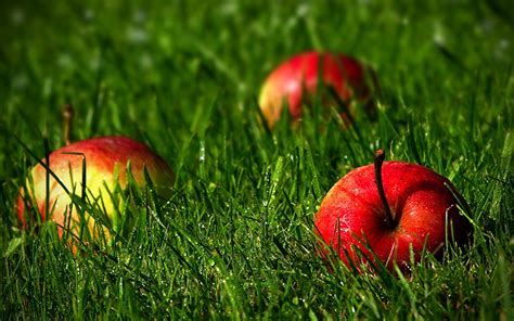 Beautiful Hd Fresh Image by Wallpaper Drops Apples Food Grass Fruit