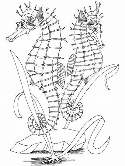 Coloring Ocean Pages Printable Adult Adults Fish