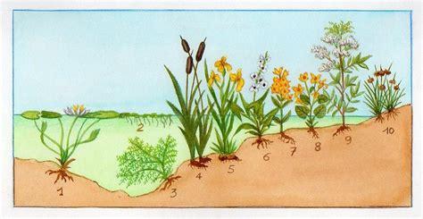 Liste Des Plantes Aquatiques