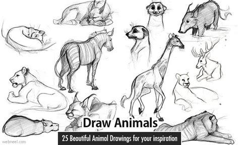 beautiful  realistic animal drawings   world