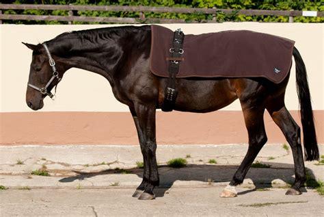 muskelaufbau beim pferd infrarot textilien
