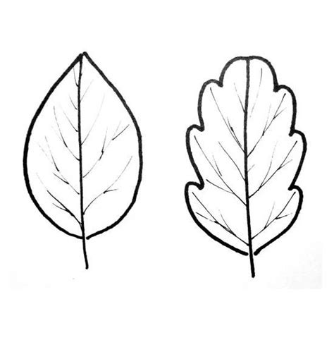 leaf coloring pages sketch of plant leaves coloring pages