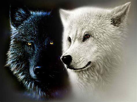 Black-and-white-wolf.jpg