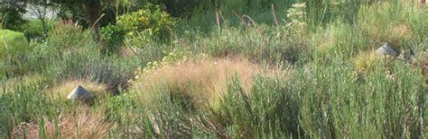 plant real florida bring  landscape  life  native plants