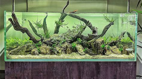 The Best Aquascape by My Best Aquascape Of 2018