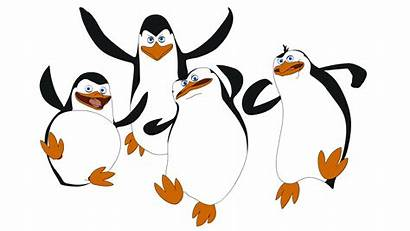 Madagascar Penguins Draw Clip Penguin Clipart Drawing