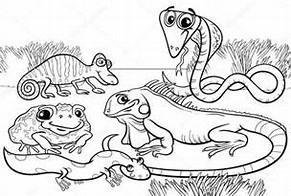 HD wallpapers amphibian coloring pages e3dandroide3dcf