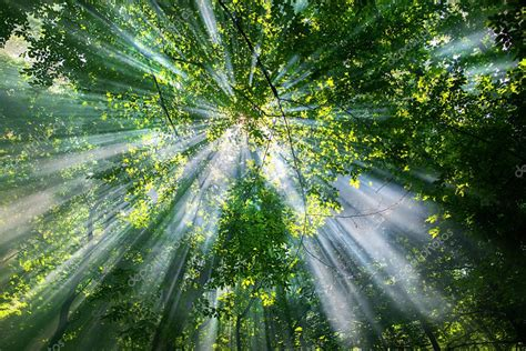 Sun rays through the trees ⬇ Stock Photo, Image by ...