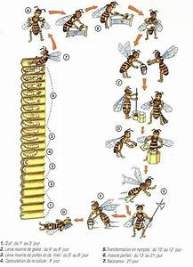 Pin By Anne Fleming On Honeybees
