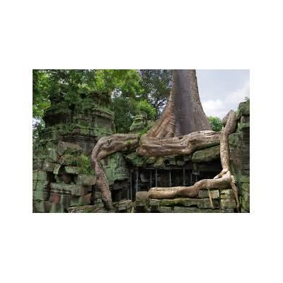 File:Ta Prohm Angkor giant tree.jpg