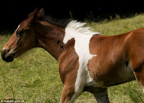 horse baby foal born looks birthmark magnificent horses pregnant they she mom