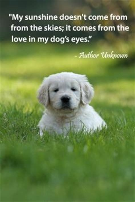 dog love  loyalty quotes quotesgram