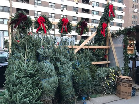 christmas tree lot near me what type of tree should you get in nyc streeteasy