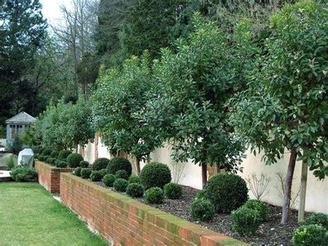Alberi Da Interno Sempreverdi - gli alberi da giardino alberi alberi da giardino