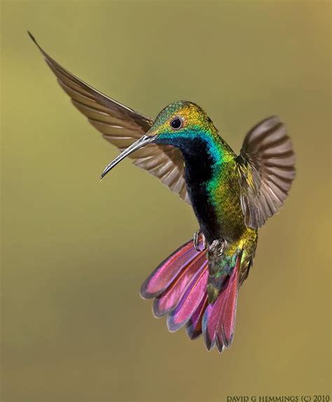 birds and barbells trochilidae