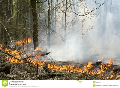 forest fire royalty  stock images image