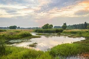 As He Exits  Michigan Lawmaker Wants To Gut Wetland