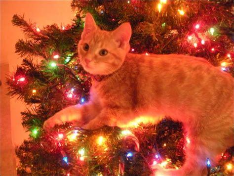 cats love christmas trees animals