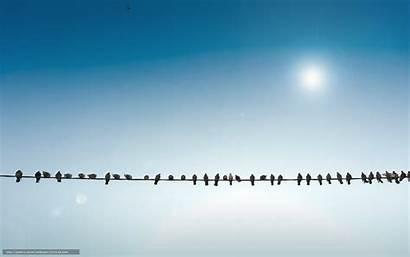 Birds Wire Lines Skies Sun Power Wallpapers