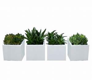 Plante Grasse Artificielle : petite plante artificielle fleurs pour composition florale ~ Teatrodelosmanantiales.com Idées de Décoration