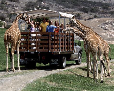 diego san zoo safari park giraffe map animals wild animal sandiego california eat attractions wildlife african giraffes go near experience